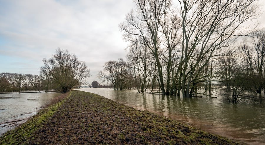 Flooding in trees